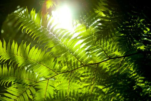 Le soleil : le poumon de la terre