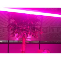 Lineaire LED Grow TOBELIGHT